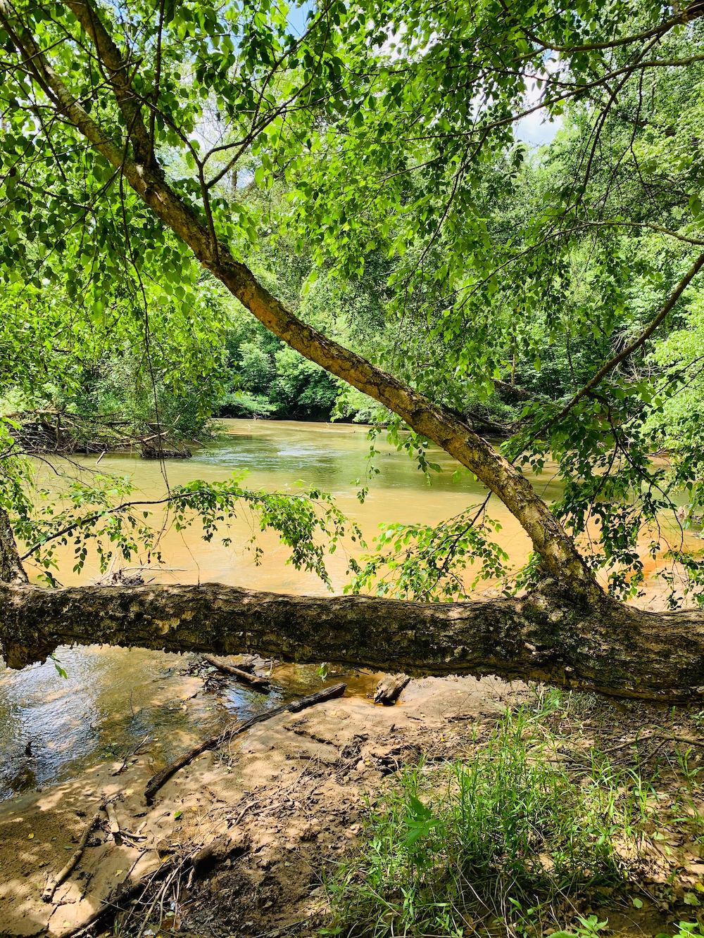 view of Saluda River at Riverstead